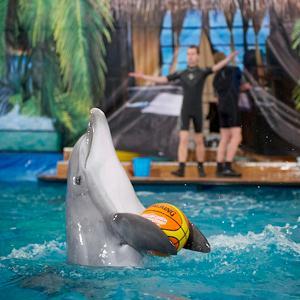 Дельфинарии, океанариумы Кикерино