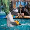 Дельфинарии, океанариумы в Кикерино